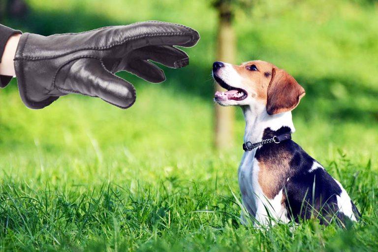Кража-собаки-768x512